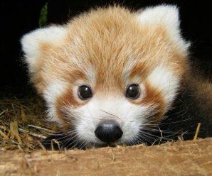 Des bébés animaux vraiment mignons